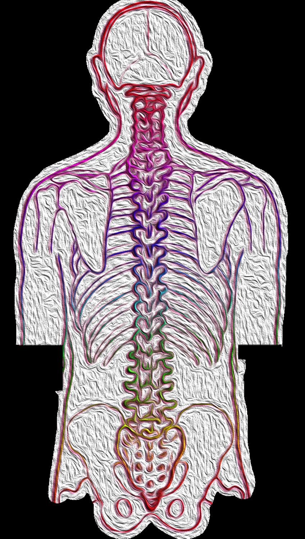 Co to znaczy traumatolog ortopeda